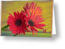 Raindrops On Gerbera Greeting Card
