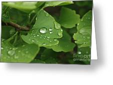 Raindrops On Ginko And Warm Woolen Mittens Greeting Card