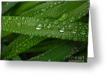 Raindrops On Green Leaves Greeting Card