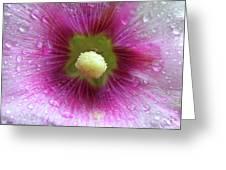 Raindrops On Hollyhocks Greeting Card