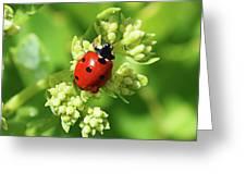 Raindrops On Ladybug Greeting Card