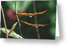 Raindrops On Leaf 3 Greeting Card