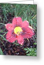 Raindrops On Lily Greeting Card