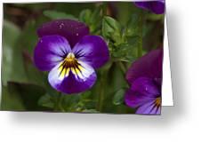 Raindrops On Pansies Greeting Card