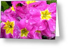 Raindrops On Pink Flowers 2 Greeting Card