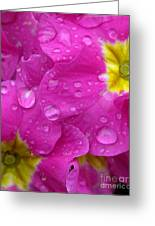 Raindrops On Pink Flowers Greeting Card