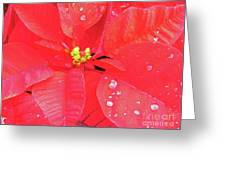 Raindrops On Red Greeting Card