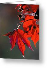 Raindrops On Red Leaves Greeting Card