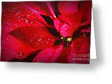 Raindrops On Red Poinsettia Greeting Card