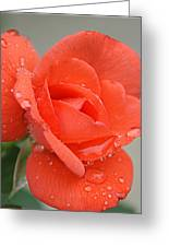 Raindrops On Roses Greeting Card