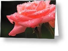 Raindrops On Roses... Greeting Card