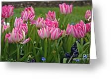 Raindrops On Tulips Greeting Card
