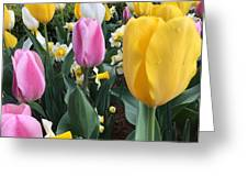 Raindrops On Tulips Greeting Card