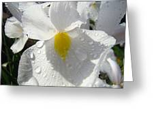 Raindrops On White Irises Flowers Sunlit Baslee Troutman Greeting Card