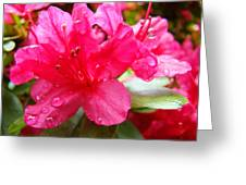 Raindrops Red Azaleas Art Prints Water Drops Azalea Flowers Greeting Card