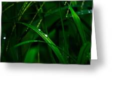Raindrops  Greeting Card