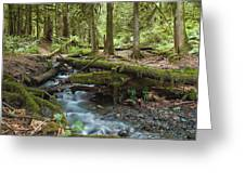 Rainforest At Bridal Veil Falls - British Columbia Greeting Card