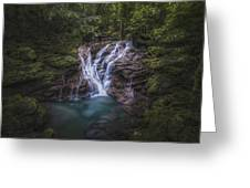 Rainforest Autumn Glow Greeting Card