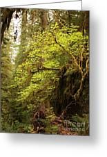Rainforest Awakening Greeting Card
