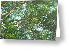 Rainforest Canopy Greeting Card