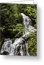 Rainforest Falls Greeting Card
