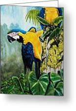 Rainforest Jewels Greeting Card