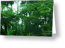Rainforest Greeting Card