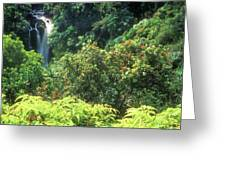 Rainforest Near Hana Greeting Card