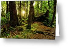 Rainforest Path Greeting Card