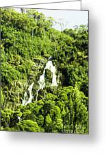 Rainforest Rapids Greeting Card