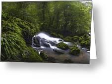 Rainforest Riverflow Scene Greeting Card