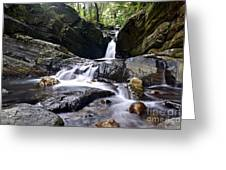 Rainforest Stream Greeting Card