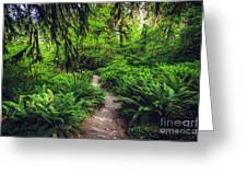 Rainforest Trail Greeting Card