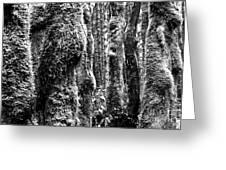 Rainforest Ubiquitous Growth  Greeting Card