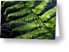 Rainforest Wonder Greeting Card