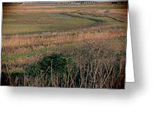 Rainham Marshes Greeting Card