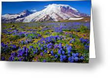Rainier Lupines Greeting Card