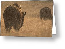 Rainy Bison Greeting Card