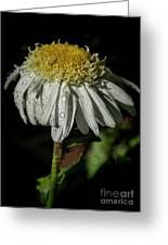 Rainy Daisy Greeting Card
