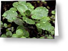 Rainy Day 11 Greeting Card
