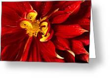 Rainy Day Dahlia Greeting Card