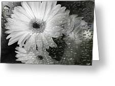 Rainy Day Daisies Greeting Card