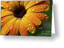 Rainy Day Daisy Greeting Card by Thomas R Fletcher