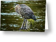 Rainy Day Heron Greeting Card by Belinda Greb