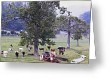 Rainy Day Longhorns IIi Greeting Card