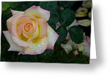 Rainy Day Rose Greeting Card