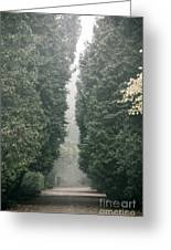 Rainy Gloomy Alley In Park Greeting Card