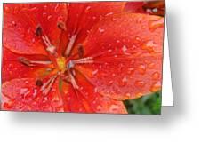 Rainy Morning Greeting Card