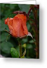 Rainy Rose Bud Greeting Card