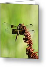 Rally Stripe Dragonfly 7 Greeting Card
